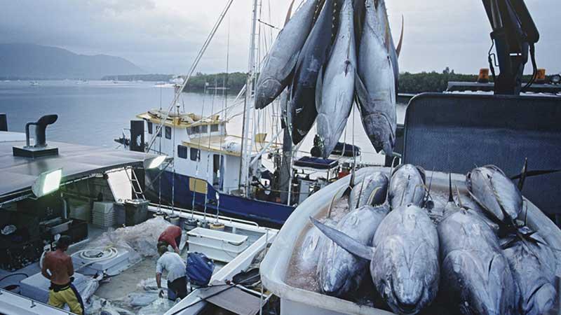 Fishing-technology